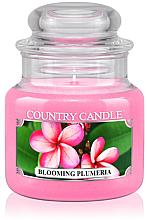 Kup Świeca zapachowa w słoiku - Country Candle Blooming Plumeria