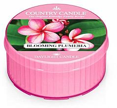 Kup Świeca zapachowa - Kringle Candle Blooming Plumeria