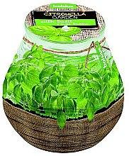 Kup Świeca zapachowa w słoiku Citronella Garden Basilic, 94/91 mm - Bolsius Candle