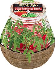 Kup PRZECENA! Świeca zapachowa w słoiku Citronella Garden Tomato Leaf, 94/91 mm - Bolsius Candle *