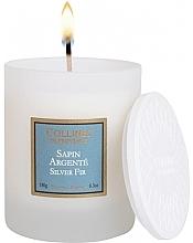 Kup Świeca zapachowa Srebrny świerk - Collines De Provence Silver Fir Scented Candle