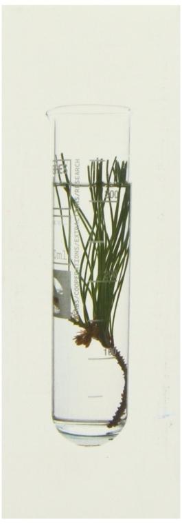 Przeciwzmarszczkowe serum do twarzy - Korres Black Pine Antiwrinkle, Firming & Lifting Serum — фото N3